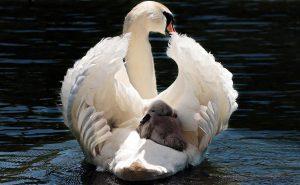 baby aromatherapy